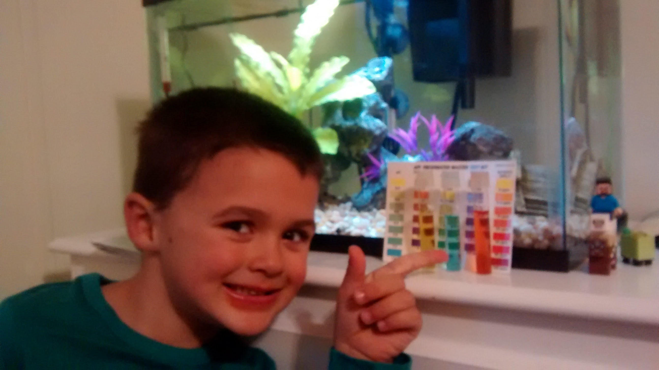 Learning in real life: Cycling a fish tank, the Nitrogen cycle, animal care, etc! This is natural learning at it's finest!